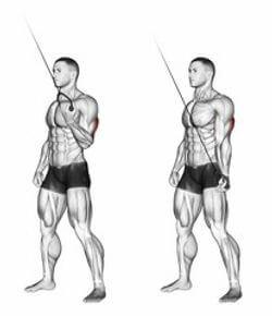 有效訓練三頭肌的動作