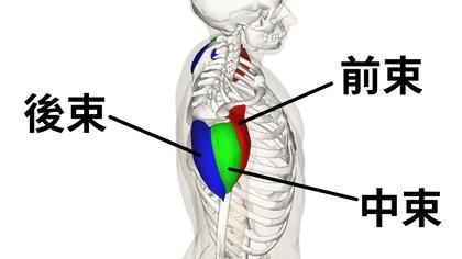 肩膀的三角肌位置