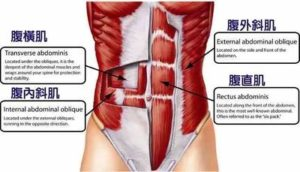 腹肌的位置在哪裡?
