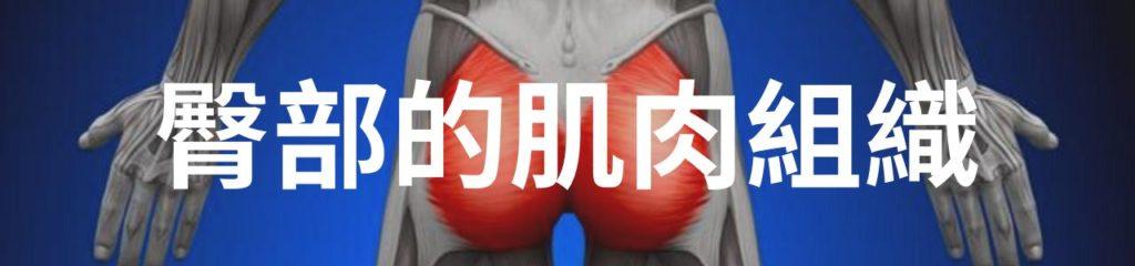 臀部的肌肉組織